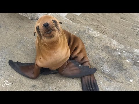 Cops Find Baby Sea Lion And Keep Him Warm All Night