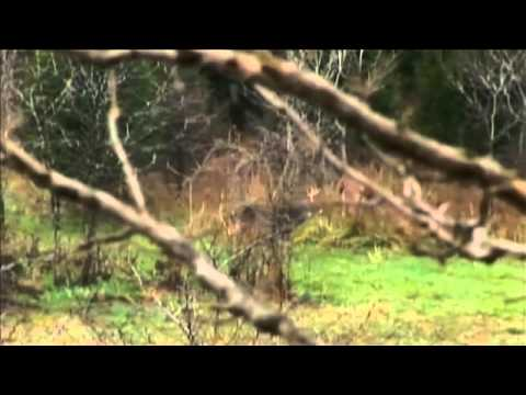 Lou's Southern Illinois Whitetail Hunt with Rocky Branch Outfitters - part 1 of 2