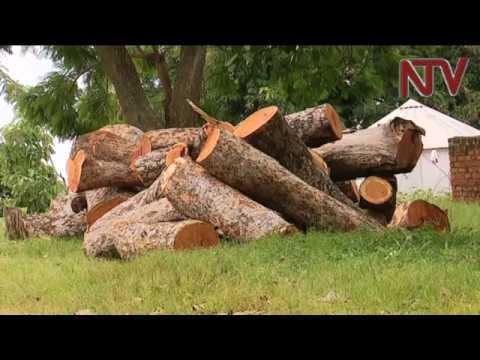 NTV PANORAMA: Cartels lead Mt. Kei forest destruction