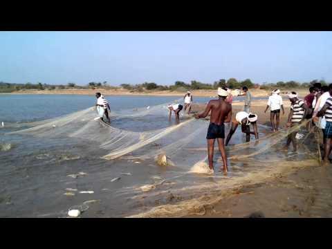 MDVP Catching fish....