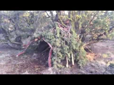 Desert Survival Shelter - Improvised Juniper Tree Survival Shelter