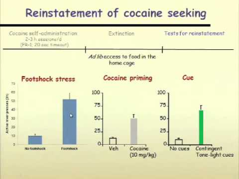Relapse to cocaine seeking: Behavioral and neurochemical mechanisms