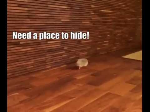 Need A Place To Hide