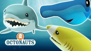 Octonauts - Who Loves Sharks?