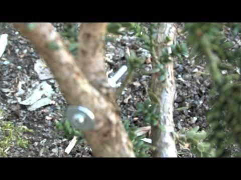 How to Repair Broken Branches