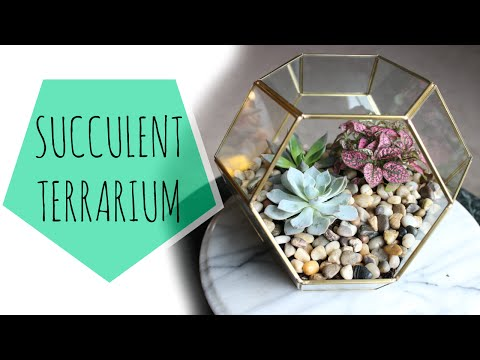 DIY Geometric Succulent Terrarium | ♥ Juli