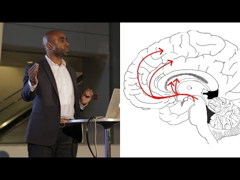Addiction and the Brain - AMNH SciCafe