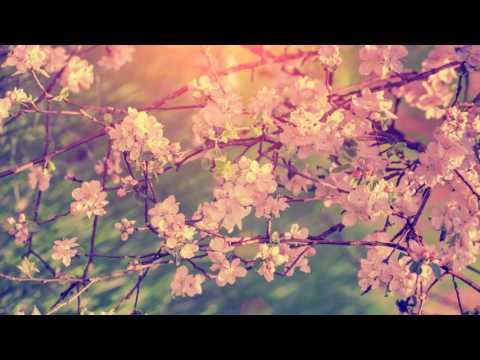 Música Relajante para el Alma con Flauta   Música Instrumental para Relajarse y Meditar   Relajación