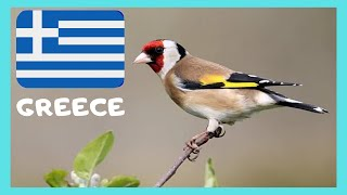 6 5 MB] Download ISLAND of AMORGOS: BIRDS SINGING (CHIRPING