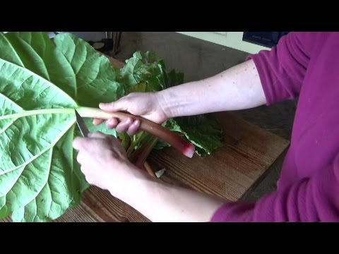 How To Make Rhubarb Scones - German Style!