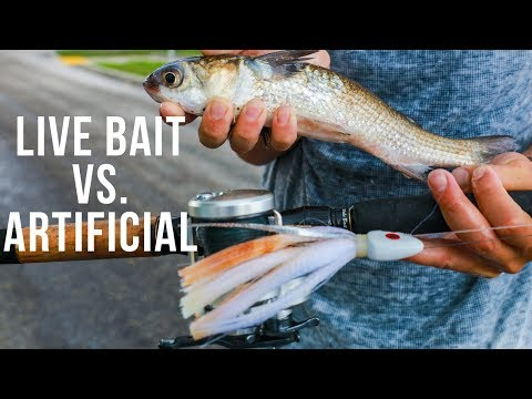 Fishing LIVE BAIT VS. Artificial Lures For BIG FISH in South Florida (ft. Lawson Lindsey)
