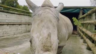 Rhino Jamila is moving to Auckland!