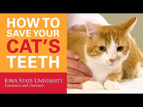 How to Save Your Cat's Teeth