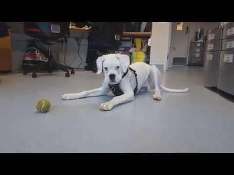 Bertie a dog at Blue Cross Suffolk