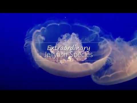 Extraordinary Jellyfish Species