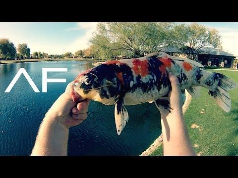 Koi Fishing