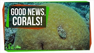 Finally, Some Good News About Corals | SciShow News