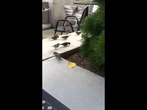 Neo Burrito birds