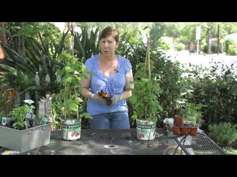 How to Cut Back a Raspberry Bush in Early Spring : Garden Space