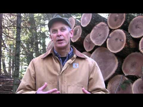 Wisconsin DNR Forester Steve Grant