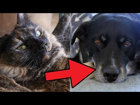 RANKING EVERY PET FROM WORST TO BEST!