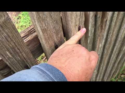 How to Fix Hard wood palings back onto a fence. Repair Screwing nailing working with hardwood attach