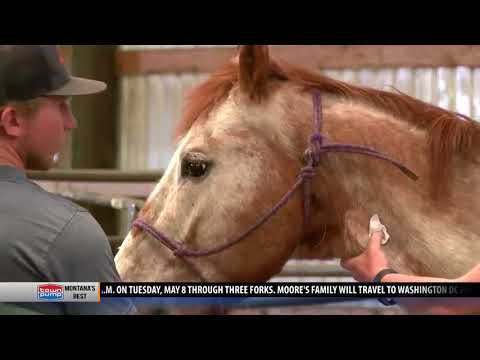 Community rallies to help grieving husband find homes for horses
