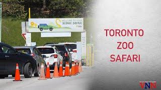 Experience Toronto Zoo's Unique drive-thru Safari | VNN Canada