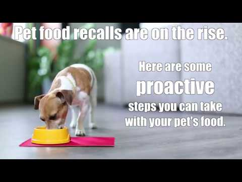 How to Help Keep Your Pet's Food Safe