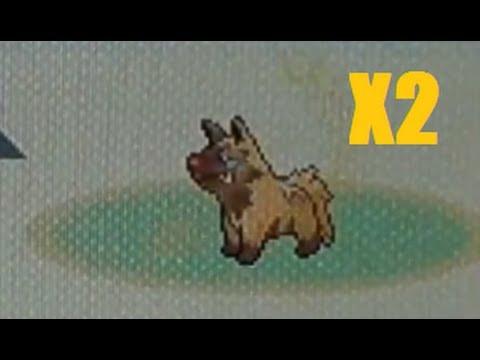 2 Live Uncatchable Shiny Poochyenas After 5,636 and 9,196 SRs (Pokemon Sapphire)