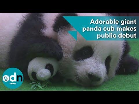 Adorable giant panda cub makes public debut