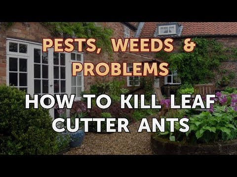 How to Kill Leaf Cutter Ants