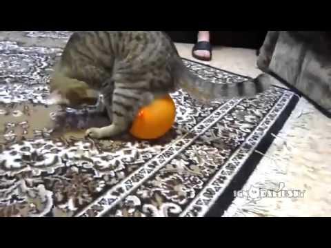 Cat vs Electrostatic Balloon