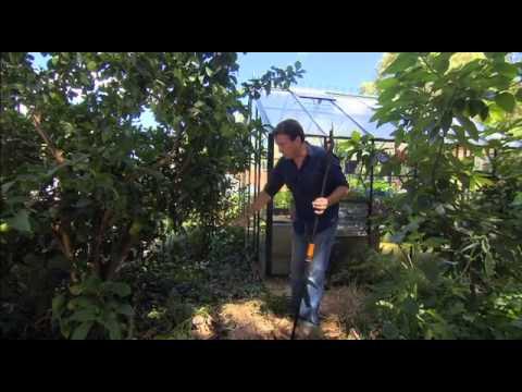 The Garden Gurus - Citrus Pruning