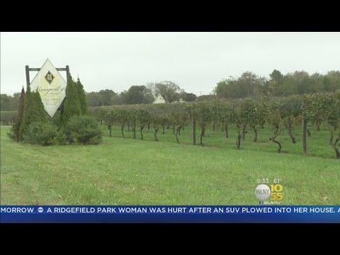 LI Vineyard Shuts Down After Losing Liquor License