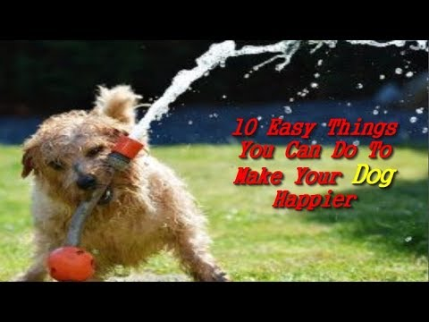 10 Easy Things You Can Do To Make Your Dog Happier