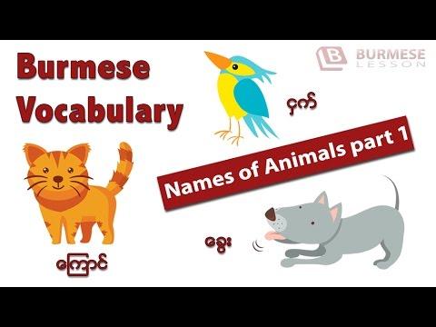 Learn Burmese language: Burmese Vocabulary - Animals part1