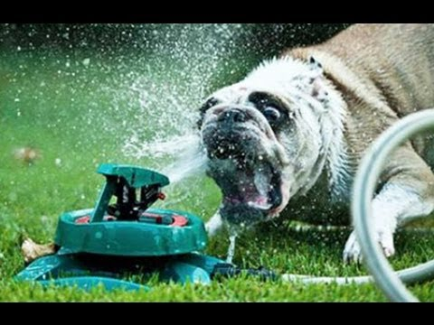 Funny Dogs vs Sprinklers Compilation