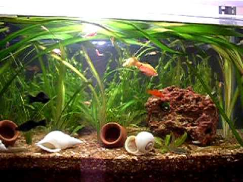 Aquarium with Garden Soil Golden Sand.MOV