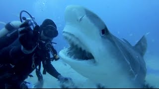 SCARY SHARK ATTACKS captured by GoPros compilation Vol.1