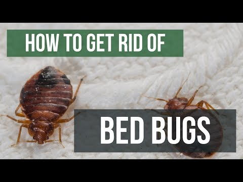 How To Get Rid of Bed Bugs Guaranteed- 4 Easy Steps