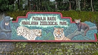 India - Darjeeling Himalayan Zoo