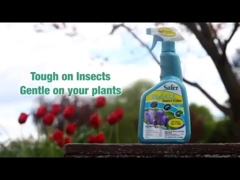 Safer® Brand Organic End ALL™ With Neem Oil Insect Killer