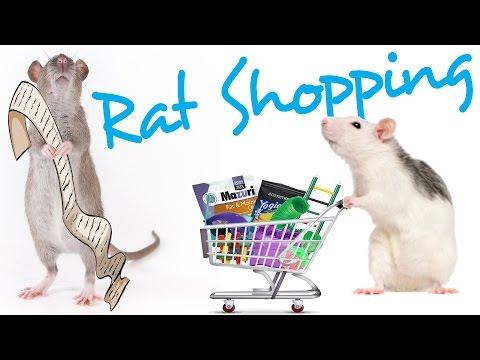 Pet Rat Shopping List | Rattiepedia: Episode 14