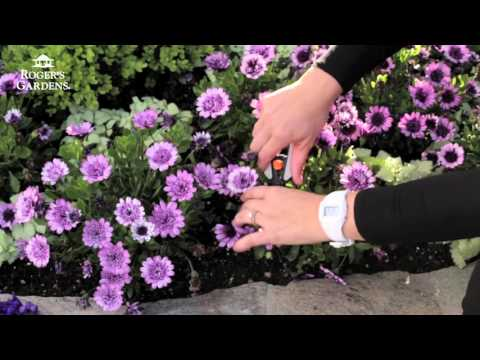 Gardening 101 Series | How to Deadhead Flowers with Tracy Wankner