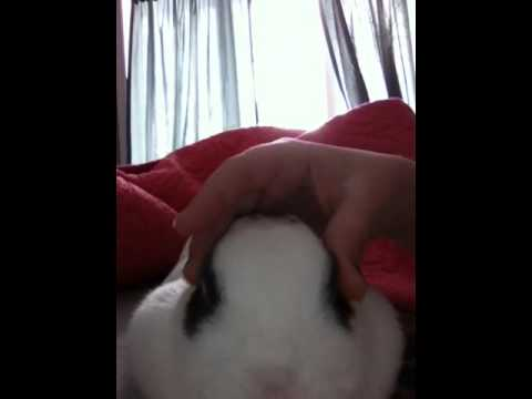 How to make your bunny fall asleep