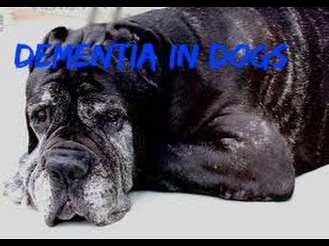 Dementia in Dogs: Natural Answers