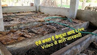 how to Preparing Vermi compost | केंचुवा खाद बनाने की विधि | जैविक खेती | केचुआ की शक्तिशाली खाद |