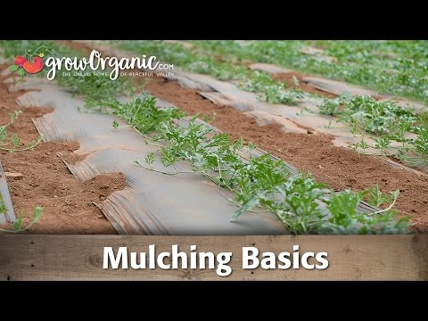 How To and How Not to Use Mulch In Your Garden