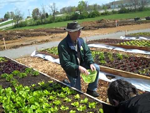 Paul Campbell demonstrates how to harvest lettuce leaf by leaf for a more productive season.,